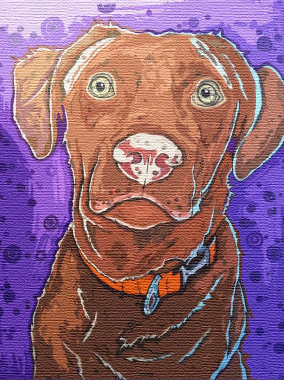 Chesapeake Bay Retriever, Dog Drawing, Dog Sketch